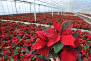 Μαφιόζοι εξανάγκαζαν καταστηματάρχες να αγοράζουν φυτά σε εξωφρενικές τιμές