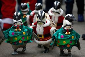 Τα Χριστούγεννα των πιγκουίνων