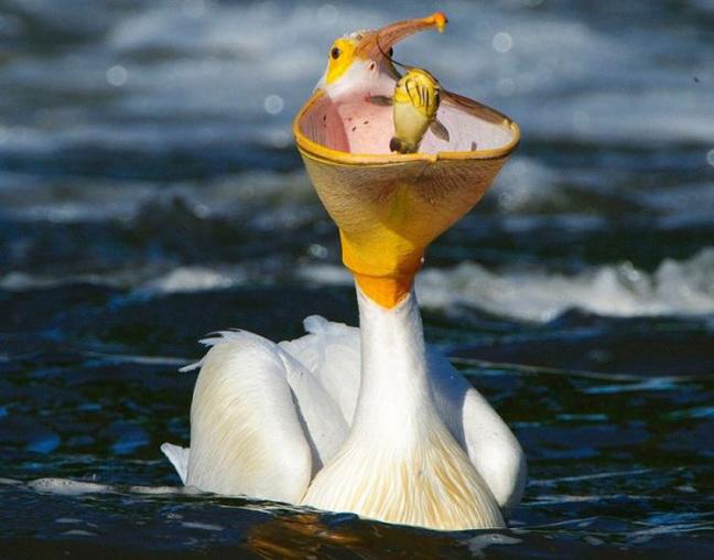 diaforetiko.gr : asteia zwa15 Εικόνες με ζώα που κυκλοφορούν στο διαδίκτυο και προκαλούν άφθονο γέλιο!!!