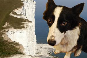 Ο σκύλος που «βούτηξε» από βράχο 90 μέτρων και επέζησε