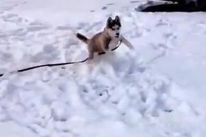 Σκυλοπαιχνίδια!