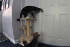 Συνεργασία γάτας και σκύλου