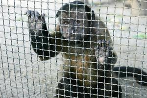 Ο χειρότερος ζωολογικός κήπος στον κόσμο