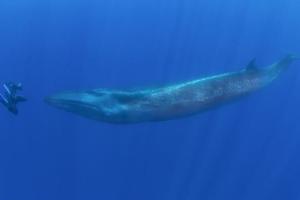 Πρόσωπο με πρόσωπο με μία φάλαινα