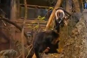 Στον ζωολογικό κήπο του Λονδίνου έχουν... απογραφή