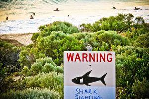 Νεκρός άνδρας στην Αυστραλία έπειτα από επίθεση καρχαρία