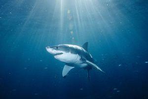 Για κολύμβηση αλά… καρχαρία