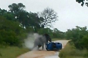 Ελέφαντας αναποδογύρισε αυτοκίνητο