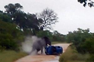 Ελέφαντας αναποδογύρισε αμάξι