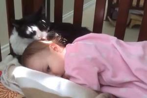 Περιποίηση από μία γάτα