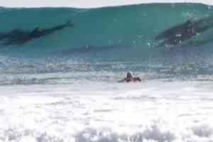 Τα δελφίνια έκλεψαν την παράσταση