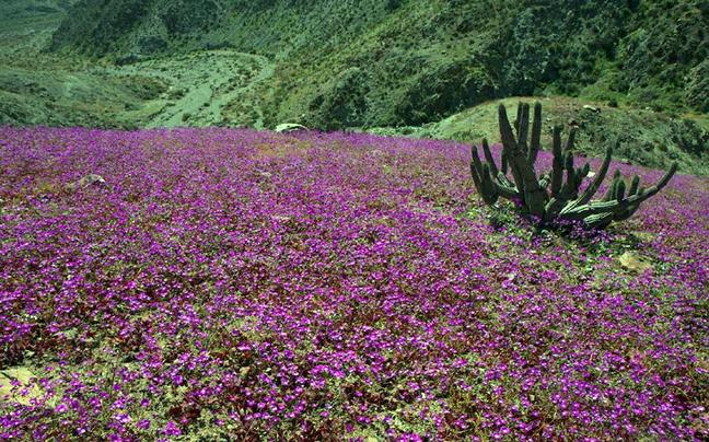 Μοναδικά φυσικά φαινόμενα: Από την «πύλη της κόλασης» μέχρι τα λουλούδια στην έρημο Atacama