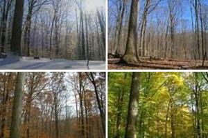 Ένα δάσος στις τέσσερις εποχές του χρόνου