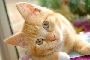 Στα μάτια της γάτα σας είστε κι εσείς μια γάτα