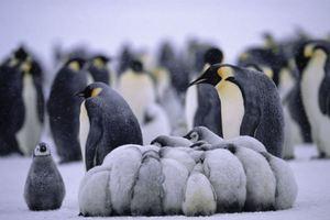 Εικόνες επιβίωσης από την Ανταρκτική