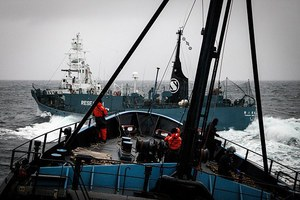 «Ναυμαχία» στην Ανταρκτική για τη φαλαινοθηρία
