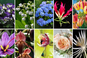 Τα δέκα πιο ακριβά λουλούδια στον κόσμο