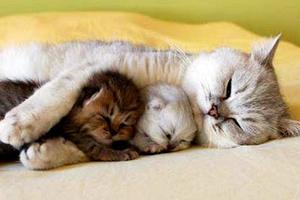 Χαριτωμένες, γλυκές, οικογενειακές στιγμές