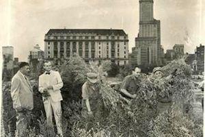 Όταν η Νέα Υόρκη ήταν καλυμμένη από... μαριχουάνα!