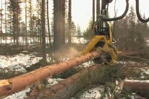 Έτσι καταστρέφεται ένα δάσος σε χρόνο ντετέ