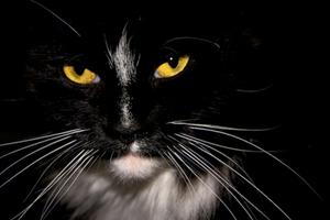 Οι γάτες βλέπουν αυτά που για εμάς είναι αόρατα