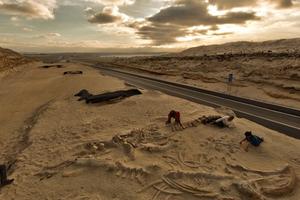 Νεκροταφείο φαλαινών δίπλα σε αυτοκινητόδρομο στη Χιλή!
