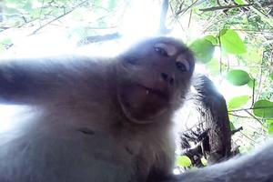 Η περίεργη μαϊμού σε απροσδόκητα... selfies