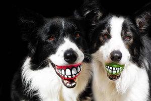 Τρελά αξεσουάρ για σκύλους