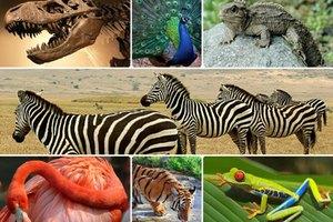 Ποια ζώα θα αφήνατε έξω από τη δική σας «Κιβωτό του Νώε»