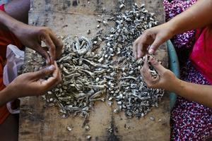 Οι σύγχρονοι σκλάβοι της βιομηχανίας αλιείας της Ταϊλάνδης
