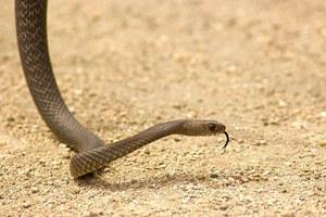 Τι να κάνετε αν σας δαγκώσει φίδι ή σκορπιός