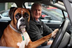 Ο σκύλος που κορνάρει στον ιδιοκτήτη του που αργεί!