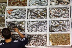 Απειλή συνιστά η υπεραλίευση για τη ζωή στα θαλάσσια ύδατα