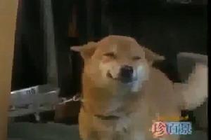 Ο χαμογελαστός σκύλος