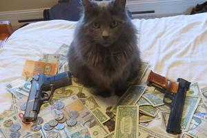 cash_cats_23_1395066320347