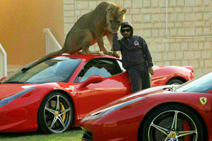 Supercars και... μεγάλες γάτες