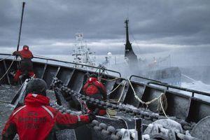 «Ασπίδα» της οργάνωσης Sea Shepherd για τις φάλαινες