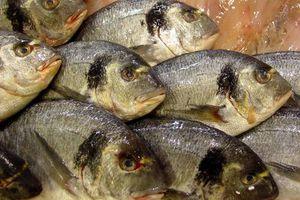 Ψάρι μία φορά την εβδομάδα για καλή υγεία