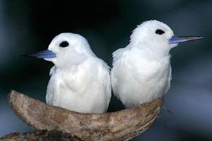 Ακόμα και τα πτηνά απατούν και παίρνουν «διαζύγιο»