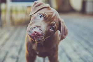Πρόστιμο 30.000 ευρώ γιατί πυροβόλησε σκύλο