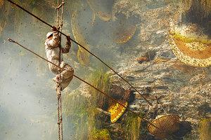 Οι κυνηγοί μελιού του Νεπάλ