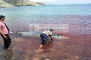 Τραγωδία με δελφίνια στις ακτές της νότιας Κρήτης