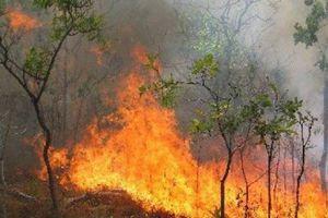 Φωτιά σε πλαγιά του Ταϋγέτου καίει δασική έκταση με χαμηλή βλάστηση