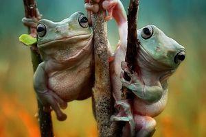 Τα βατραχάκια που κρατιούνται από το χέρι…