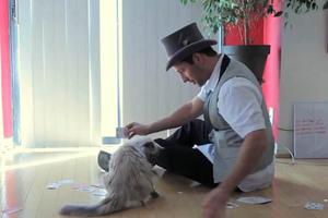 Γάτες και μαγικά τρικ