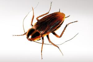 Ρομπότ-κατσαρίδα θα τρυπώνει παντού