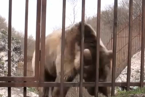 Η πιο ροκ... αρκούδα