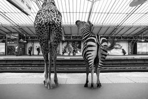 Επέλαση ζώων στο μετρό του Παρισιού