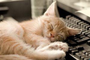 cda71a730c84 Ο καλύτερος φίλος του άντρα είναι… μια γάτα