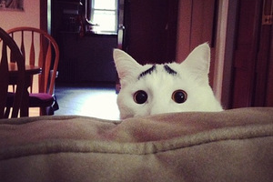 Σαμ, ο γάτος με τα πιο απίθανα φρύδια
